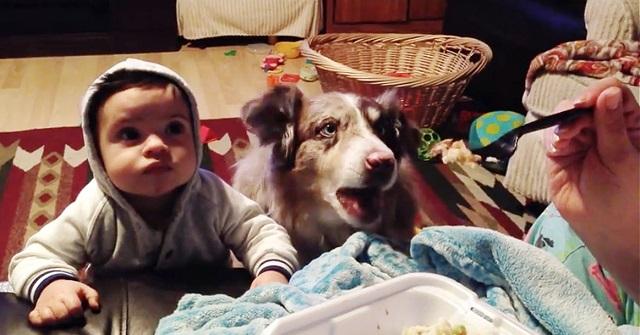 kutya-gyerek-vacsi-kozben
